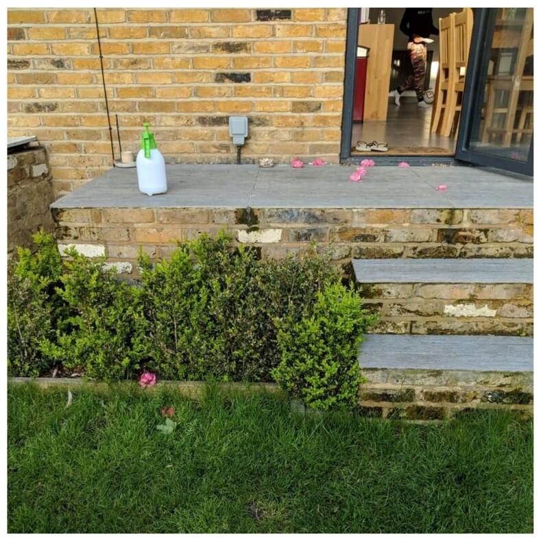 Когда тайным поклонником оказалась кошка она воровала розы у своих хозяев, чтобы подбросить цветы любимым соседям (милые фото)
