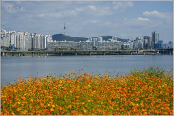 В Южной Корее вновь закрывают музеи и бары из-за вспышки коронавируса