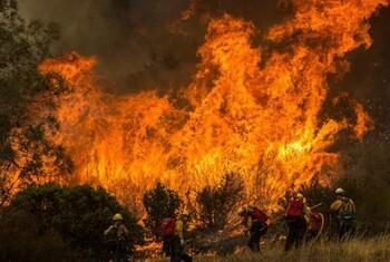 В Калифорнии из-за сильных лесных пожаров введён режим ЧС
