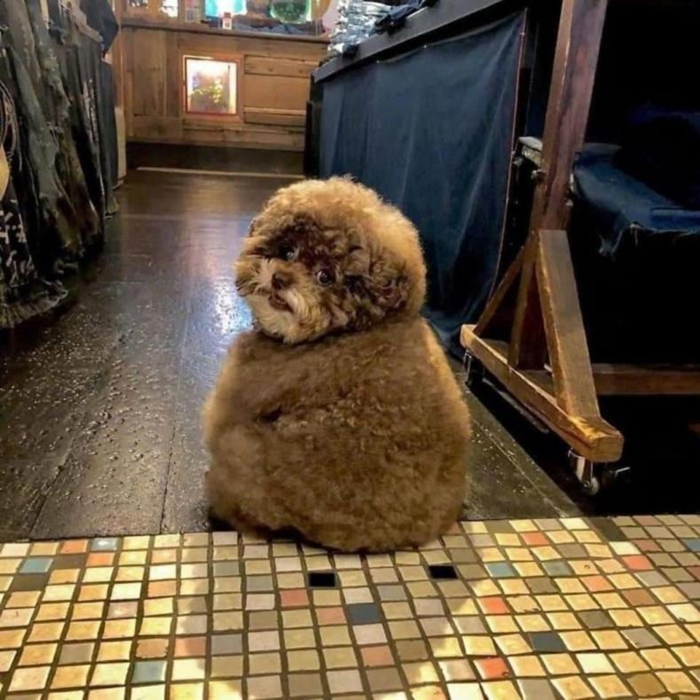 Плюшевый пес, похожий на персонажа Звездных войн, своими фото покорил сердца миллионов пользователей Сети