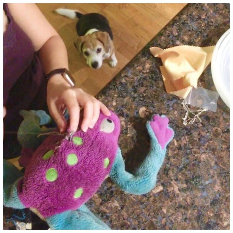 11 трогательных и забавных фото питомцев, которые сильно волнуются, когда хозяева чинят их любимые игрушки