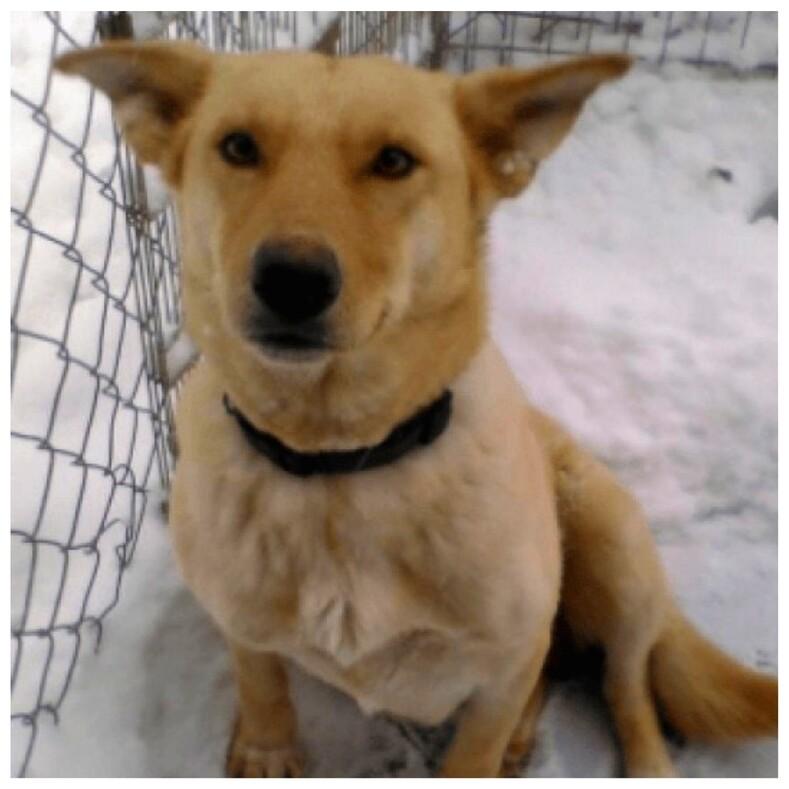 Собака три недели жила со своими шестью щенками в сугробе без еды, спасаясь от холода и гибели, пока их не нашли люди (трогательная история и фото)