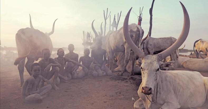 Правила жизни пастуха мундари: посыпать голову пеплом и использовать абсолютно все, что дает корова