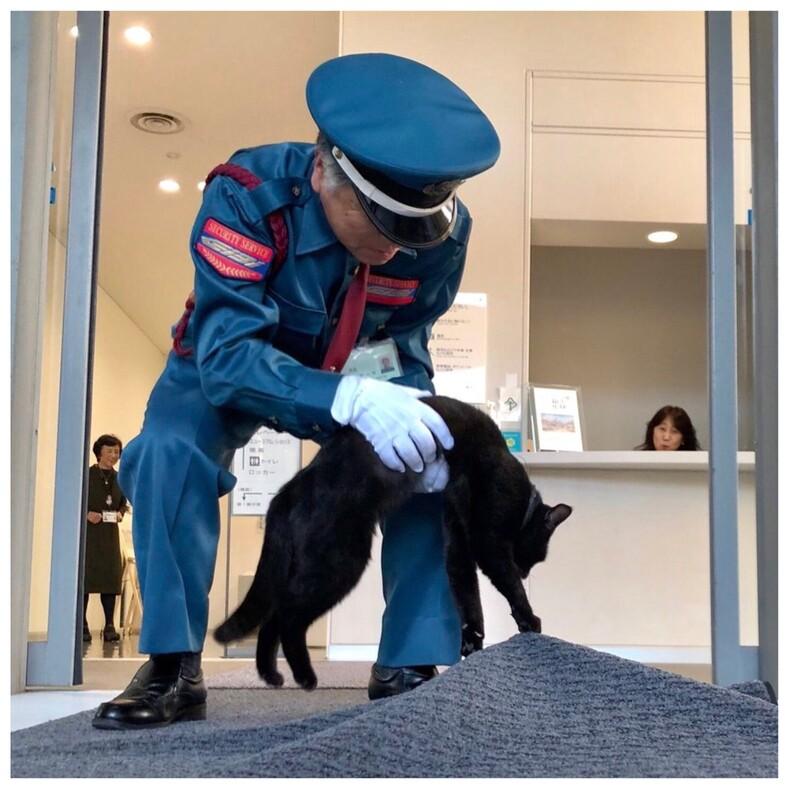 Два кота 4 года пытаются пробраться в музей, но им мешают охранники (тысячи пользователей следят за этим милым противостоянием и всей душой болеют за котов)