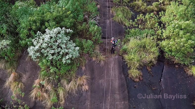 Ученый открыл девственный лес на вершине горы в Мозамбике с помощью Google Earth