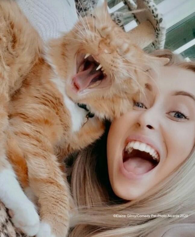 Конкурс комедийных фотографий с домашними животными кто участвует в 2020 году?