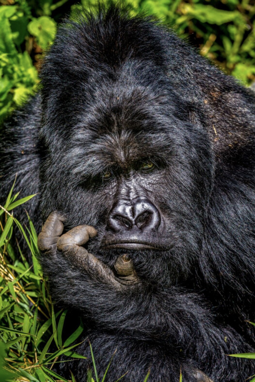 25 финалистов Comedy Wildlife Photography Awards 2020: фото ухмыляющейся рыбы, застрявшего енота, смеющихся слонов и не только