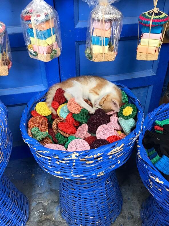 Коты из магазинчика у дома: колоритная особенность Нью-Йорка, о которой мало кто знает