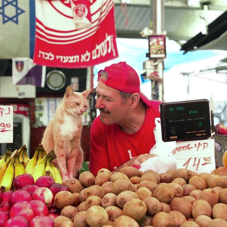 Коты из магазинчика у дома колоритная особенность Нью-Йорка, о которой мало кто знает