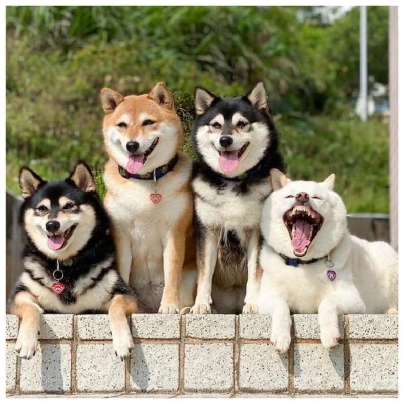Собака, которая постоянно портит семейные снимки (и это никак не исправить): смешные фото, прославившие вредину на весь мир