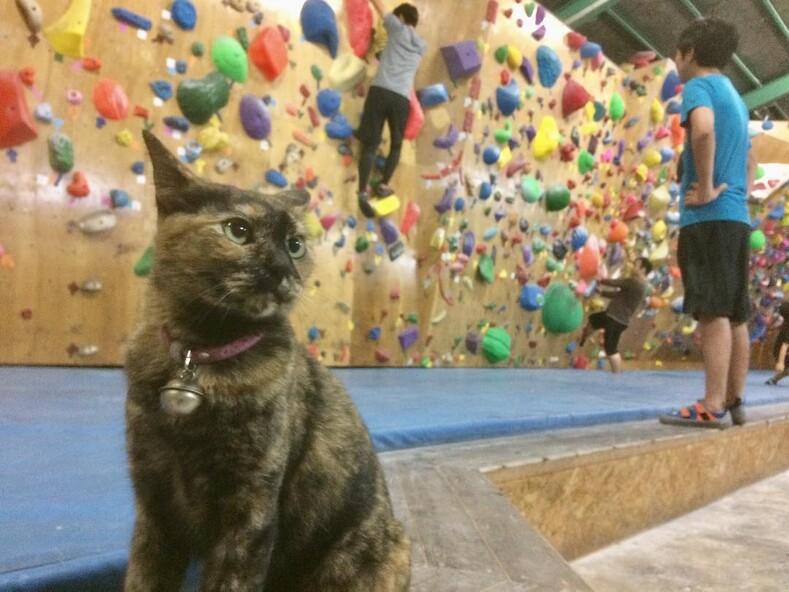 Уличную кошку приютили в зале для скалолазания, и она начала тренироваться вместе со всеми