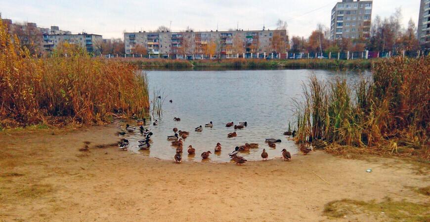 Пляж в парке 777-летия Нижнего Новгорода