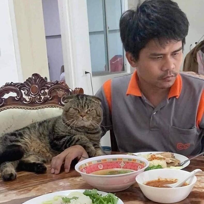 Этот кот увел моего мужа: смешные фото ревнивого кота, который одним взглядом дает понять никто не может приближаться к его человеку