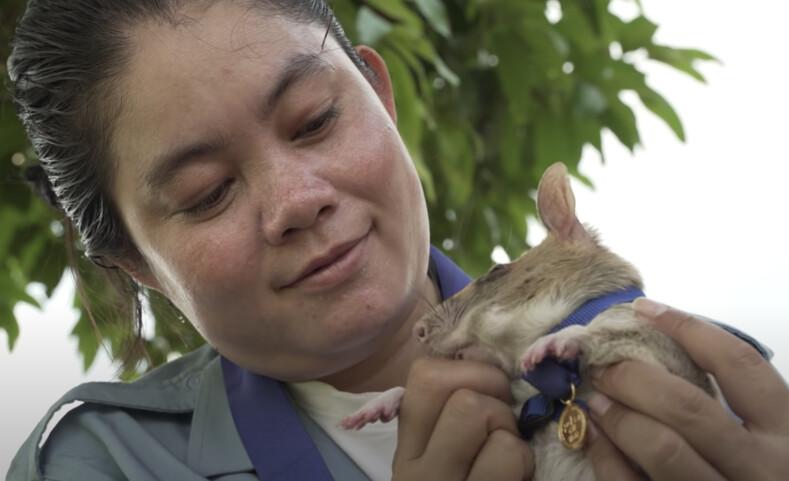 Хвостатый сапер получил золотую медаль за то, что обнюхал 20 футбольных полей в Камбодже