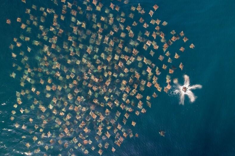 Названы 20 лучших фотографий дикой природы, снятых с дронов в 2020 году