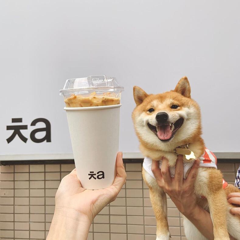 Пес прославился своей бурной реакцией при виде еды: вкусности делают улыбку только шире и это сложно скрыть