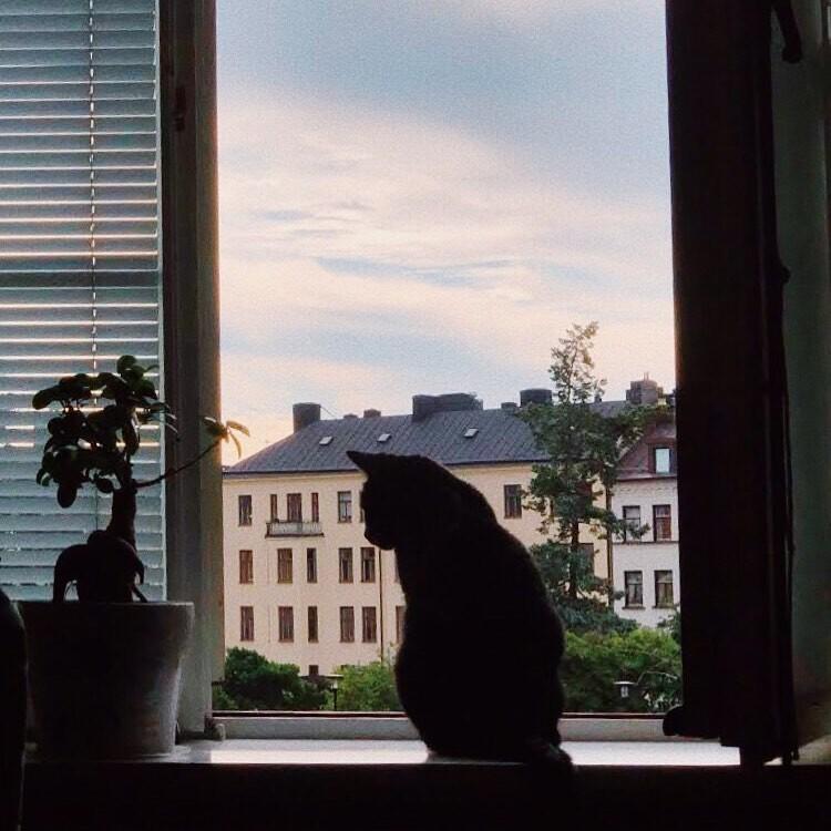 Загляните в чужие окна: незнакомцы обмениваются видами, на которые они смотрят каждый день