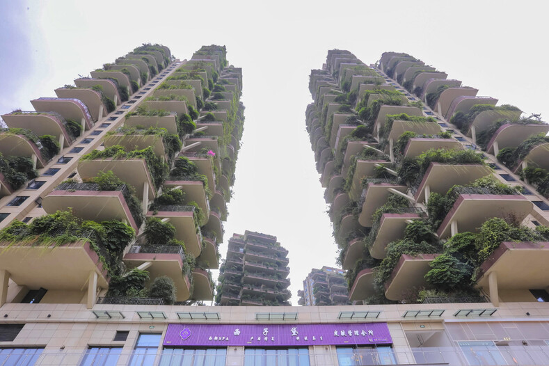 Фото пустующих башен-джунглей, где живут всего 10 семей: многие боятся сюда переезжать и все из-за полчищ насекомых (выглядит это как декорации к фильму-катастрофе)