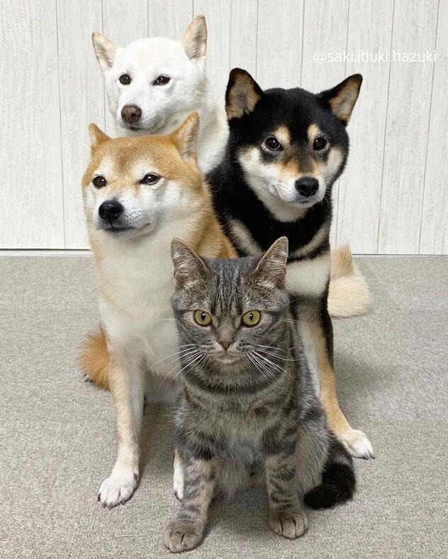 Кажется, здесь есть кто-то лишний: кошка, которая думает, что она собака