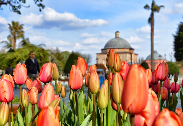 Тюльпаны на площади Султанахмет