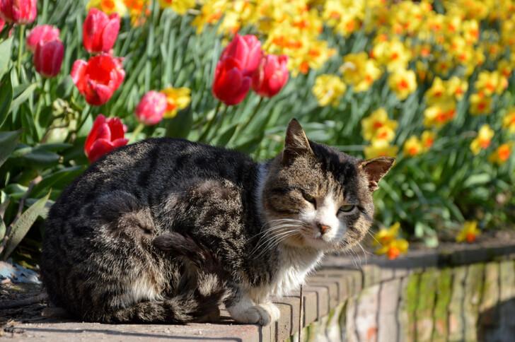 Котик в парке Гюльхане в апреле