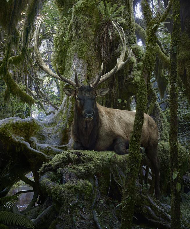 Фотохудожник из Нью-Йорка поднял снимки дикой природы на совсем иной уровень