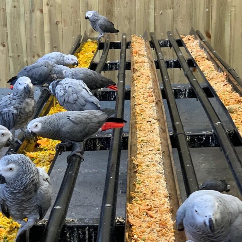 Посетители парка были в шоке: пять попугаев-матерщинников, которые ругаются похлеще бывалого моряка