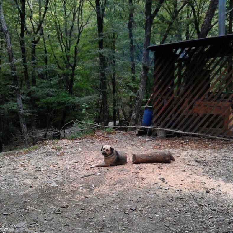 Фото из серии показалось: 12 домашних животных, которые на пару секунд не на шутку испугали своих хозяев
