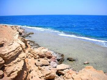 В Египте на берегу обнаружили 11 мертвых дельфинов