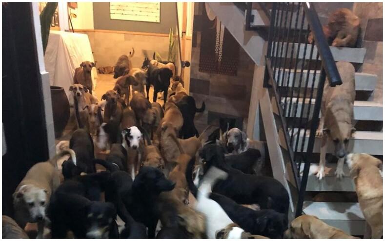 Мужчина приютил у себя дома 300 животных, чтобы спасти их от страшного урагана (фото из дома выглядят пугающе)