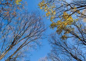 Осенний день в Хвалынске
