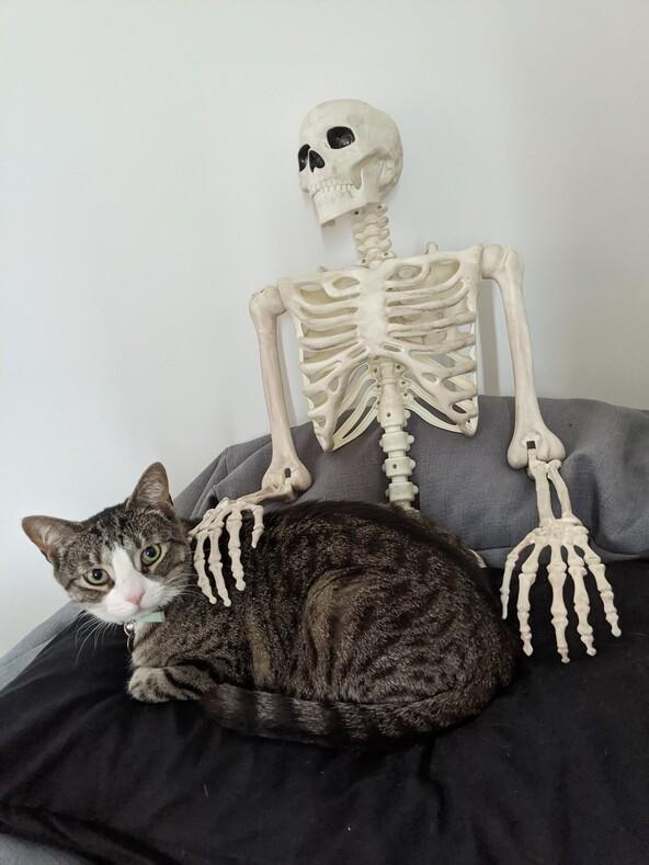 Что ж, теперь ты знаешь, что она сделает, когда ты умрешь: реакция кошки на подушку-скелет размером с человека