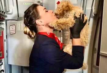 «Уральские авиалинии» позволят животным лететь вместе с владельцами в салоне