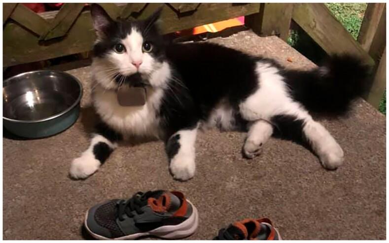 Когда у воришки лапки: кот-клептоман каждую ночь тащит чужую обувь в свой дом (фото коллекции ворованных туфель и гордого кота)