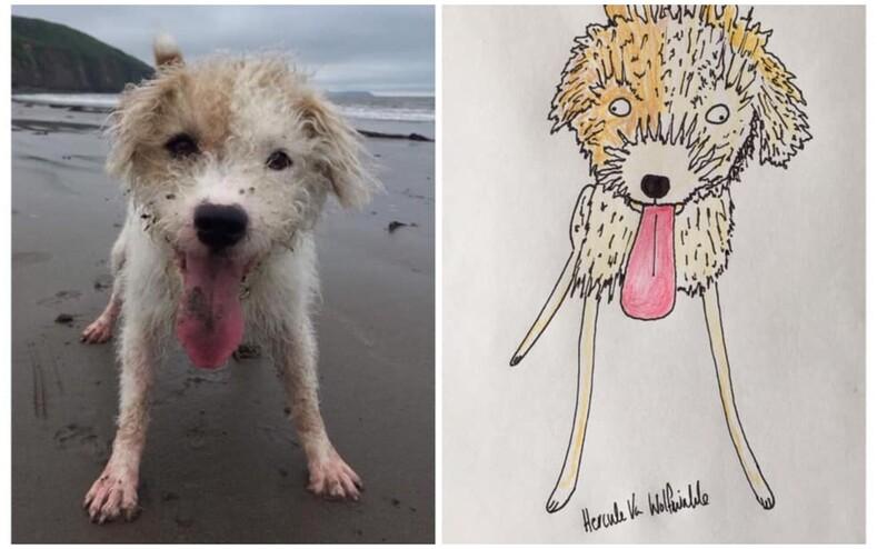 Мужчина не умеет рисовать, но все равно создает портреты животных на заказ и его каракули обожают в Сети (фото питомцев и то, какими их видит художник)