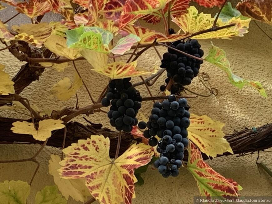 Что такое «Био» вино?