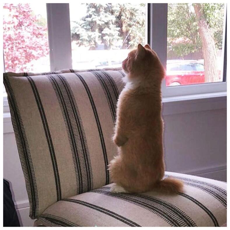 Кот без передних лап, научившийся ходить, как человек, покоряет мир: фото новой Интернет-звезды