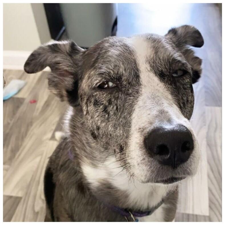 10 собак, которые одним взглядом показывают, как сильно они осуждают своих хозяев (веселый челлендж, захвативший тысячи пользователей)