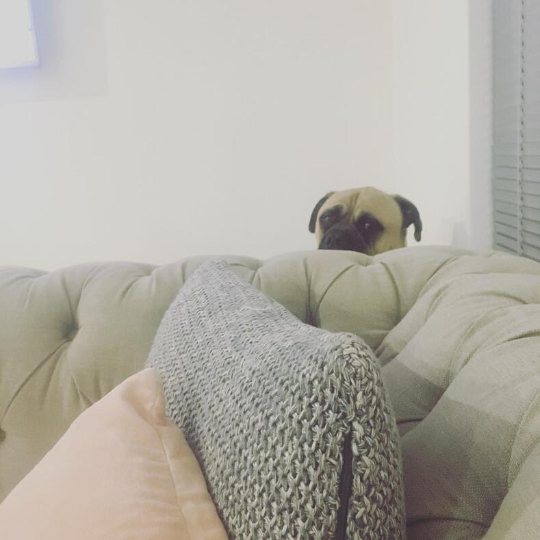 12 смешных фото собаки-шпиона, которая постоянно подглядывает за хозяйкой: тот случай, когда агента всегда рассекречивают