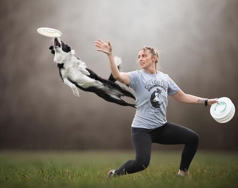 15 летающих собак: фото, на которых удалось заснять суперспособности домашних питомцев