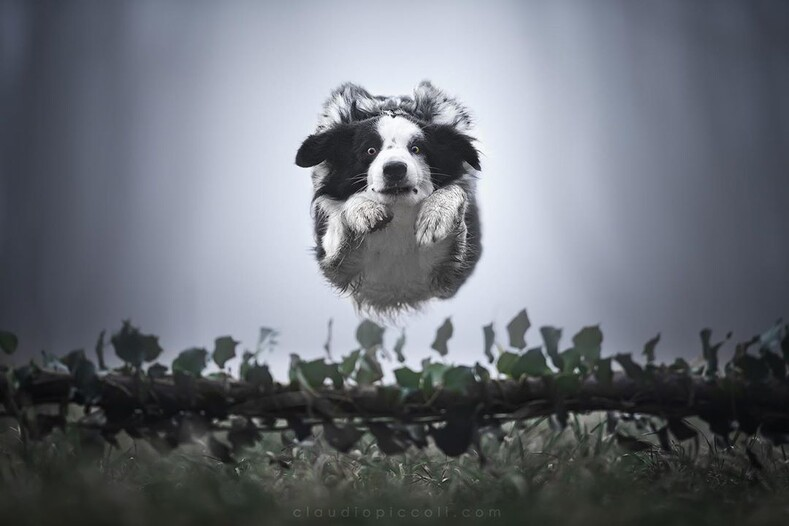 15 летающих собак фото, на которых удалось заснять суперспособности домашних питомцев