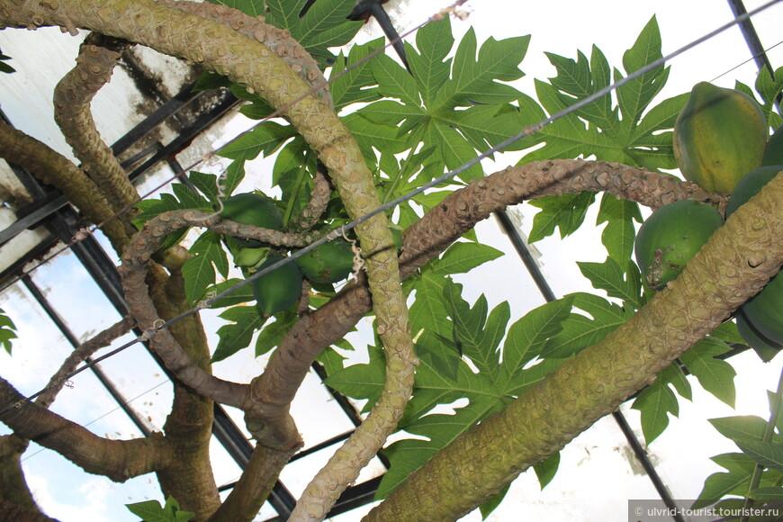 Тропические растения в Средней полосе России