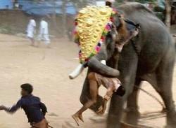 Украинских туристов на Пхукете раздавил слон