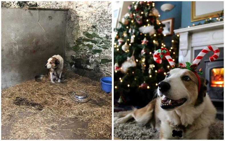 До/после: снимки животных, которые были на краю гибели, но любящие хозяева спасли их и вернули веру в людей (на фото невозможно смотреть без слез)