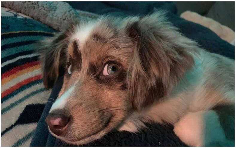 Пользователи делятся фото своих улыбающихся собак и от этого можно хохотать до слез (15 снимков питомцев, которые спасут ваше настроение)