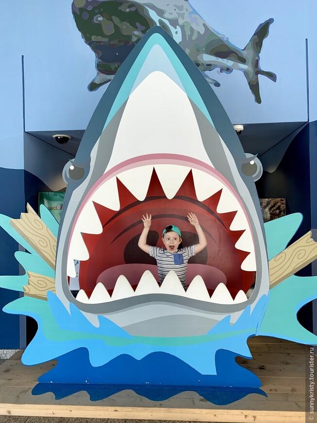 Sharjah Aquarium VS Dubai Aquarium