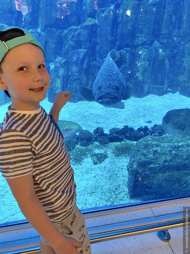 Аквариум в Дубае. Рыба с большим ртом)