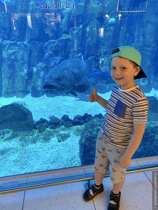 Аквариум в Дубае. Это стена аквариума в Дубай молле, которую видят все посетители молла. Чтобы на нее посмотреть не нужно покупать билет.