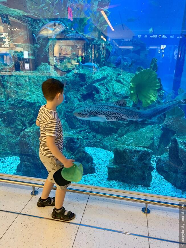 Аквариум в Дубае. Какая то длинющая необычная рыбина. В аквариуме в Дубай молле 33.000 разновидностей рыб и морских животных. А в самом аквариуме 10 миллионов литров воды.