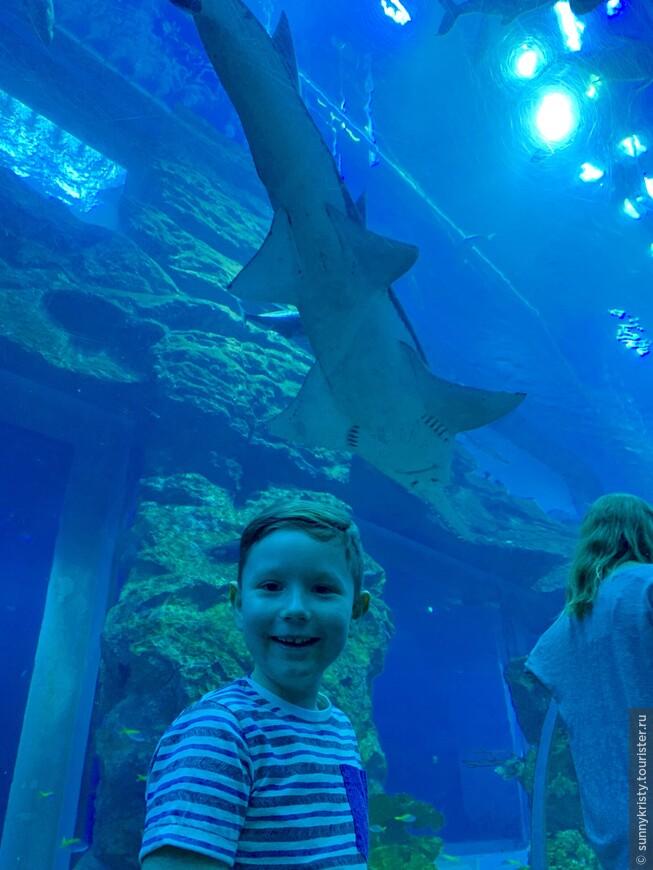 Аквариум в Дубае. У рыбины есть рот)
